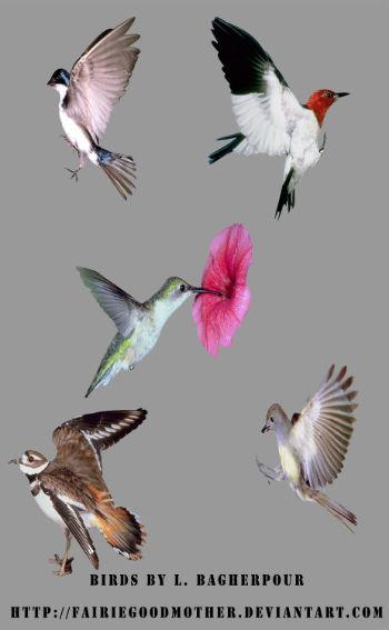 Маленькие птички