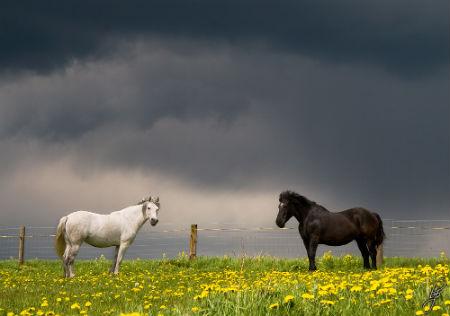парочка лошадки
